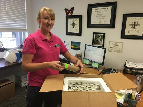 Catherine Pruszynski, a research biologist for the Florida Keys Mosquito Control District, receives a shipment of 25,000 Wolbachia-infected mosquitoes three times a week.