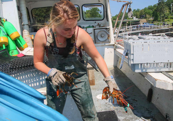 Sadie Samuels offloads lobsters from her boat.