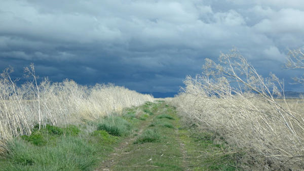 <p>Weather moves fast over one of the wilder sections of Lower Klamath Wildlife Refuge.</p>