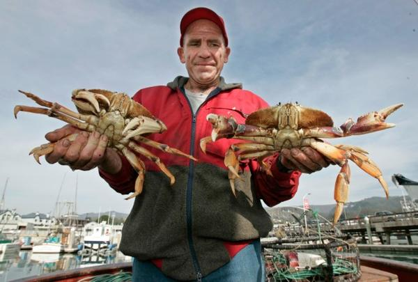 <p>Commercial fisherman Duncan MacLean holds up two crabs he just caught from his boat in Half Moon Bay, California, Wednesday, Dec. 3, 2008.</p>