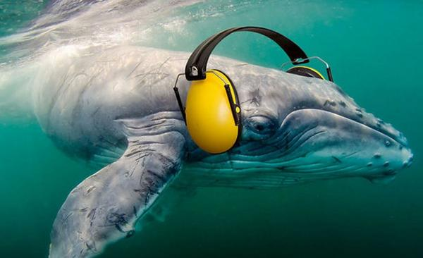 Environmentalists fear seismic testing will silence and disorient whales and other sea mammals to a dangerous degree.