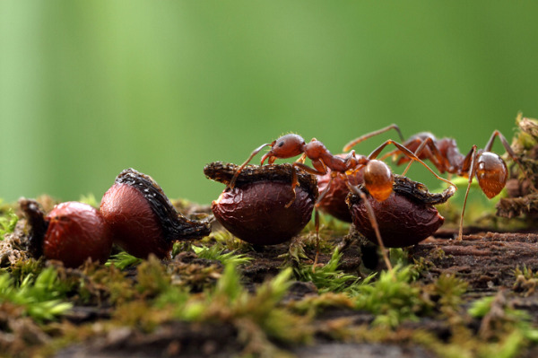 Ants have a wide range of personality traits, according to researcher Eleanor Spicer Rice