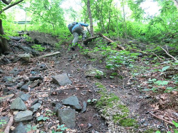 Elizabeth Farnsworth led the way, heading to a spot where she last saw a rare Glaucescent Sedge.