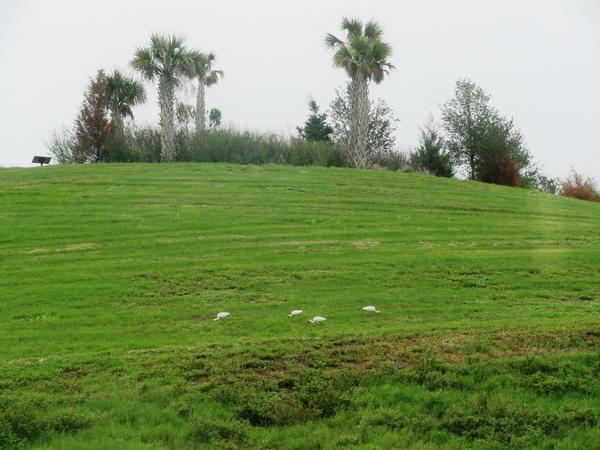 The hill at Celery Fields
