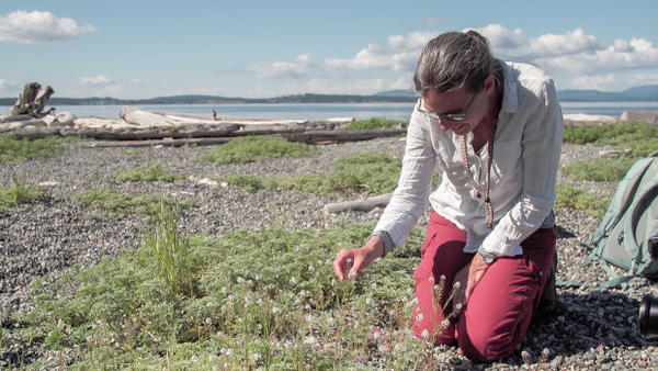 <p>Amy Lambert, a conservation biologist at the University of Washington, has been studying the island marble for the past 15 years.</p>