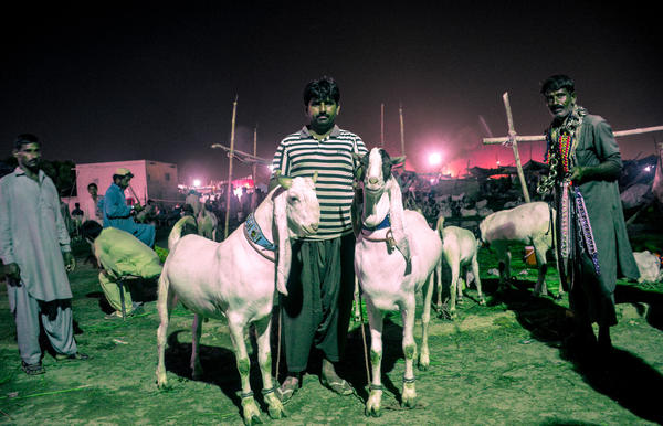 Karachi hosts an annual market where herders bring hundreds of thousands of goats to sell in the days leading up to Eid al-Adha.