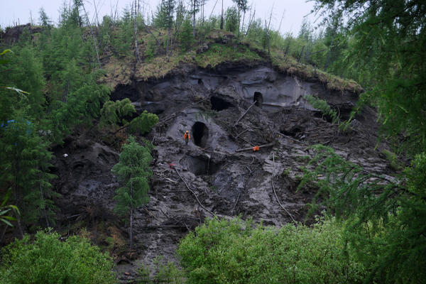 Tusk hunting causes erosion along the edges of the hill.