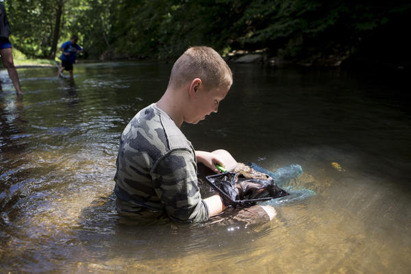 Ben Kiko, 11, keeps a hellbender salamander in the water until it's ready for release.