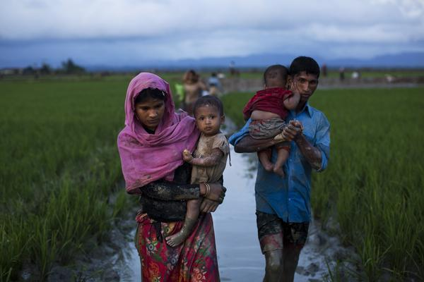 Members of Myanmar's ethnic Rohingya minority trek through rice fields after crossing the border into Bangladesh on Friday. Myanmar's military says nearly 400 people have died in violence in the western state of Rakhine.