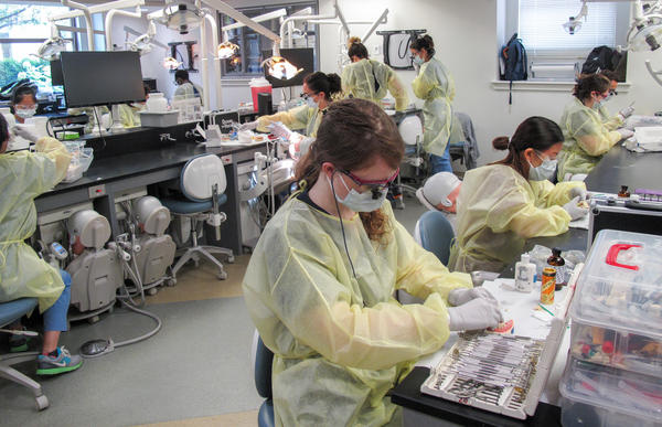 Third-year students at the Harvard School of Dental Medicine learn how to trim crowns and prep a tooth for a crown. They're also learning to deal with the aftereffects, studying alternatives to opioids for pain relief.