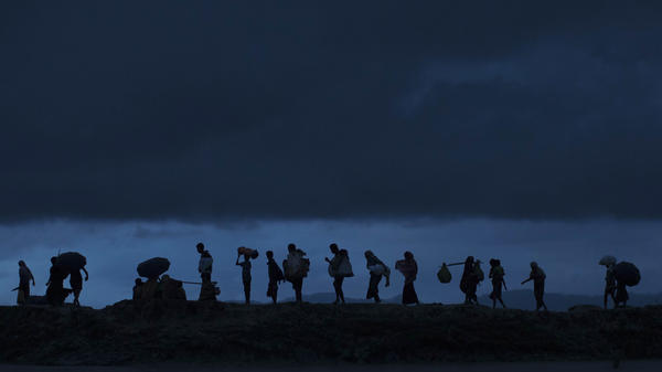 "Rohingya refugees trek through Bangladeshi paddy fields at dusk Saturday after crossing the border. Some 300,000 people have fled Myanmar since violence flared anew in the western state of Rakhine, where military reprisals appear to be a ""textbook example of ethnic cleansing."""