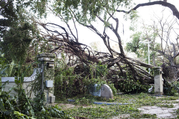 A fallen tree blocks the entrance to Bristol Tower Condominium in Miami. More than 6 million electricity accounts in Florida were without power, state officials said Monday.