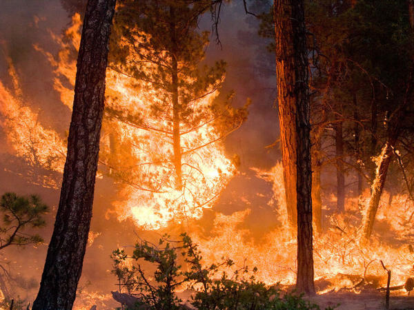 "<p>All that black smoke you see from a wildfire is full of small particles that are bad for your lungs and heart. The small particles are ""a lot worse"" than researchers previously thought.</p>"