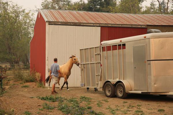 <p>Five horses live on Hiatt's Corbett property.</p>