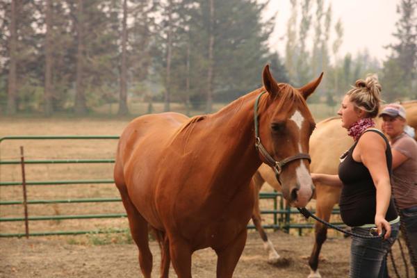 <p>Volunteer Jessica Condon coaxes a horse into a trailer on a farm evacuating on LittlepageRoad in Corbett.</p>