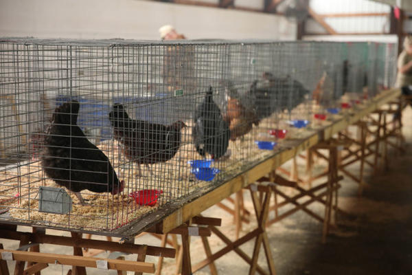 <p>The Red Cross shelter in Stevenson, Washington has room for animals. People have brought their dogs, cats, chickens, ducks and bunnies.</p>