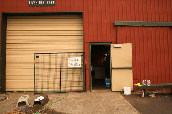 <p>People evacuated from the Eagle Creek Fire have brought dozens of pets and animals to the shelter in Stevenson, Washington.</p>