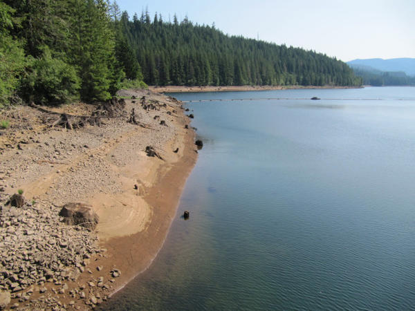 <p>The banks of Reservoir 1 in the Bull Run Watershed.</p>