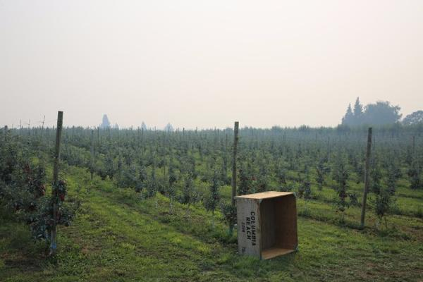 <p>Smoky conditions from nearby wildfires have led some farmworkers to go home early in Hood River, Oregon.</p>