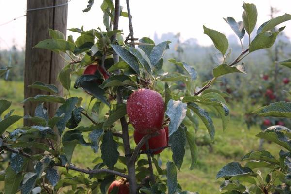 <p>Farmers in the Pacific Northwest say they're not concerned about the smoke impacting their fruit, but they are worried about the safety of their workers.</p>