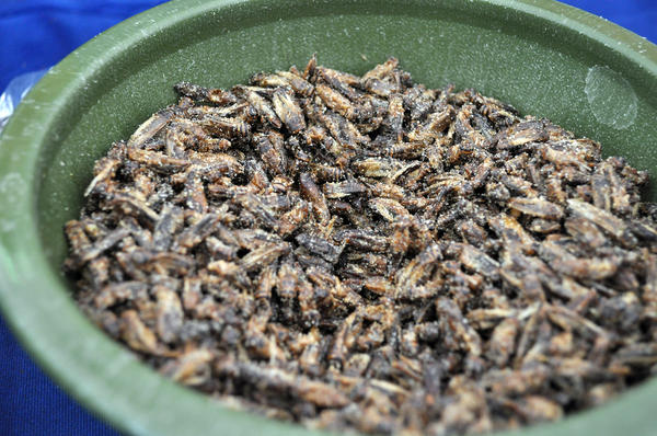 Festivalgoers could try crickets from Aketta, an edible insect company based in Austin, Texas. The crickets come in a variety of flavors, such as spicy hot, sour cream and onion, and Texas BBQ.