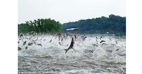 Asian carp are considered one of the invasive, or nuisance, species that this plan hopes to keep out of the Great Lakes