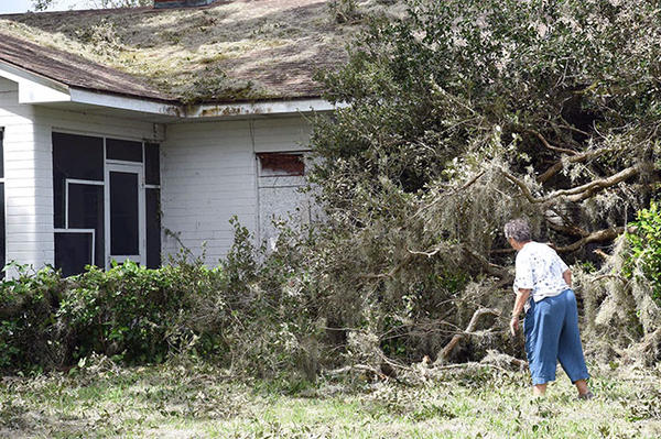A woman looks at a tree that fell on a Pasco County house during Hurricane Irma.