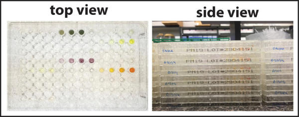 <p>The OSU team checked the function of proteins using phenotypic microarrays — a high-throughput system featuring plates with 96 wells per plate, each well representing a different culture condition for the proteins.</p>