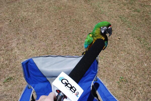 Mango is microphone shy.