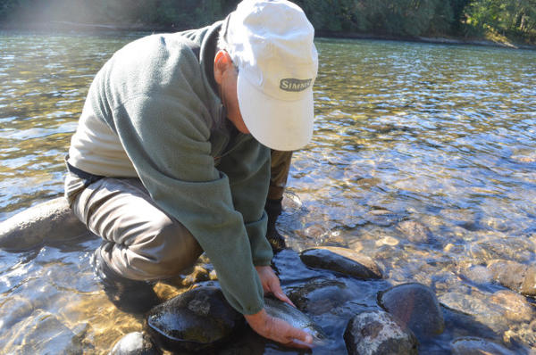 <p>The Green River is a gene bank river, which means it's important for the survival of wild steelhead.</p>