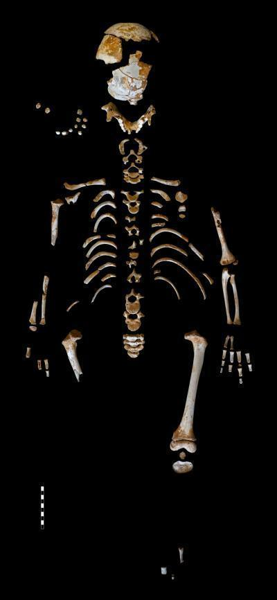 The skeleton of what is believed to be a Neanderthal boy was recovered from the El Sidrón Cave in Asturias, Spain.