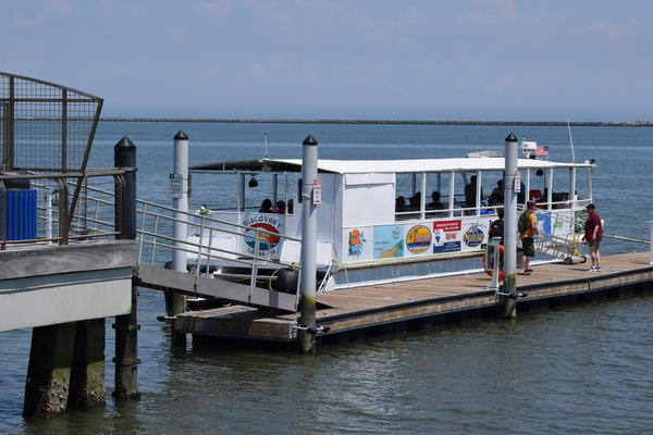Lewes-based Cape Water Tours and Taxi takes people to the Delaware Bay to learn about the creatures that live there.