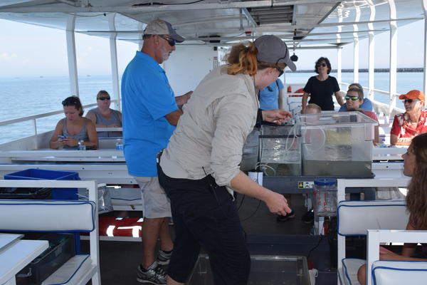 Captain Steve and tour guide Kathleen reach into the bucket to pull out some creatures.