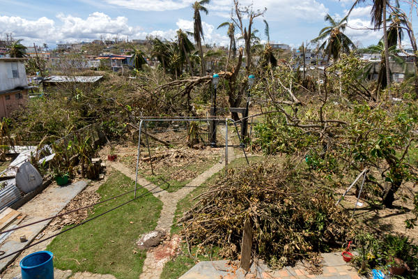 Jose Torres's backyard after Hurricane Maria.