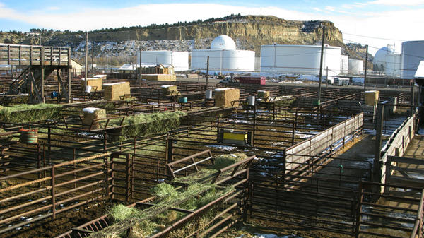 Billings, Mont., has a diverse economic base, as evidenced by the confluence of stockyards, oil refineries and natural beauty. The unemployment rate for Billings' Yellowstone County was 5.3 percent in September, far lower than the national average.