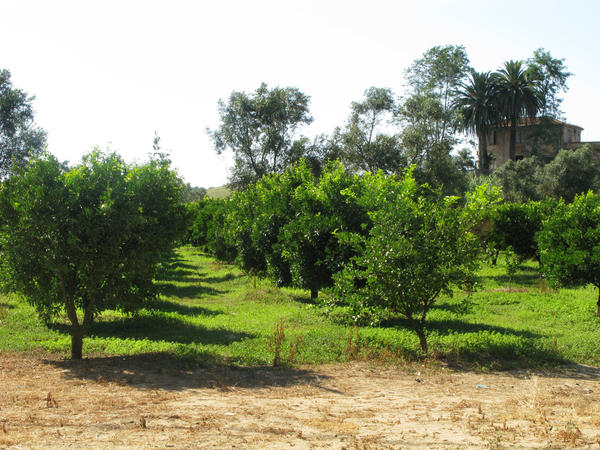 With its vast citrus groves, Calabria is a major stop for migratory workers in the country.