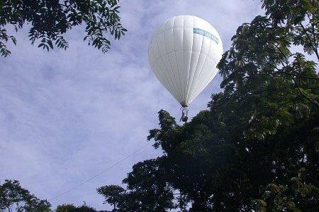 Researchers also used a hot air balloon-style system to collect arthropods from thie top of the forest canopy.