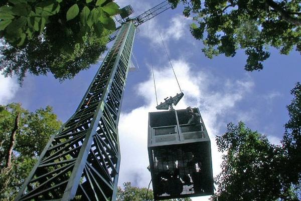 A construction crane was also built in the forest to allow access to different levels of the forest.