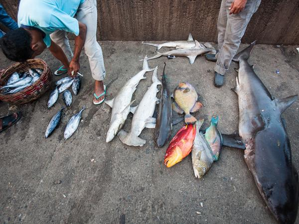 Indonesian fishermen unload their catch, including sharks and baby sharks, in Lampulo fish market in Banda Aceh last week.