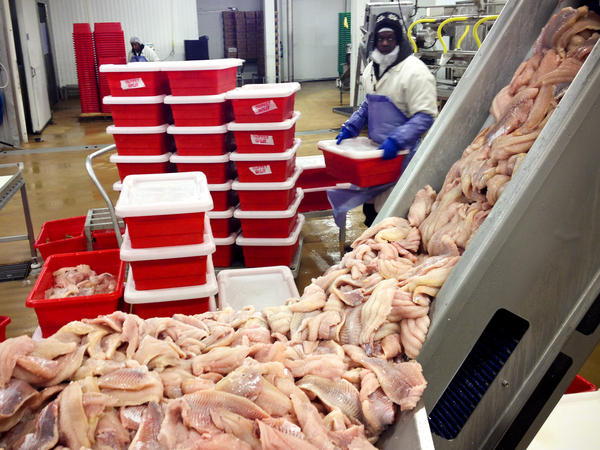 Workers clean and flash freeze catfish at the Pride of the Pond processing plant near Tunica, Miss.