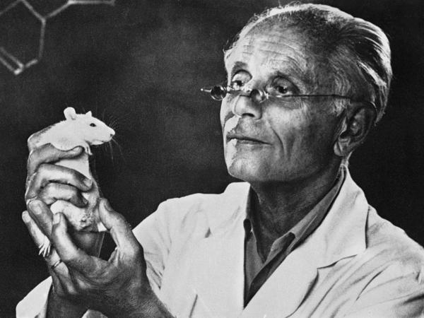 Endocrinologist Hans Selye popularized the idea of stress. His experiments with rats showed that prolonged exposure to stress led to physiological changes in the tissue of rats.
