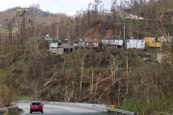 Trees and vegetation near Cayey were knocked down by the winds packed by Hurricane Maria.