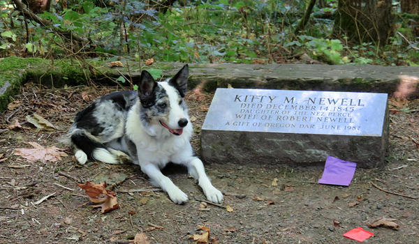 Historical records conflict as to whether the gravestone for Kitty Newell is in the right place. Archaeology dog Jasper signals that he smells old human remains.
