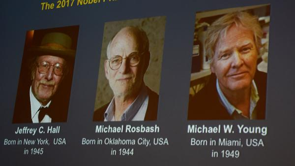 Winners of the 2017 Nobel Prize in Physiology or Medicine were shown on a screen at Monday's announcement. From left to right: Jeffrey C. Hall, Michael Rosbash and Michael W. Young.