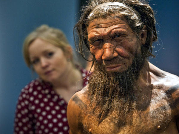 An employee of the Natural History Museum in London peeks at a model of a Neanderthal male in his 20s on display for a 2014 exhibition.