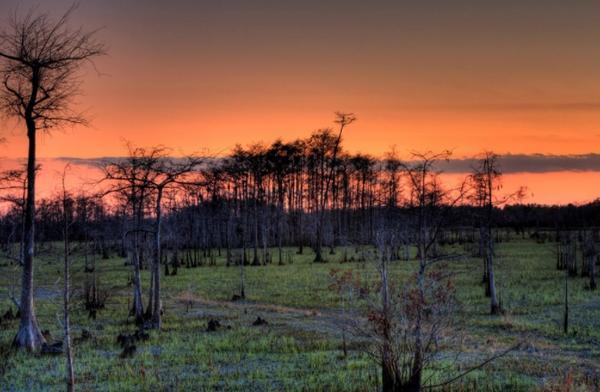 Big Cypress National Preserve