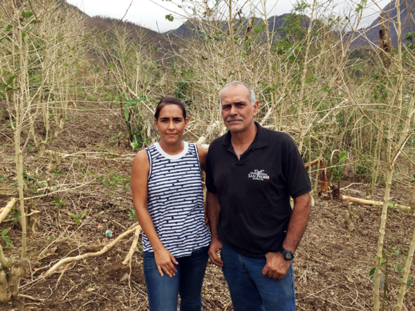 Rebecca Atienza and her father,  Roberto, stand in a grove of decimated coffee trees. Hurricane winds stripped these trees nearly bare of leaves and beans.