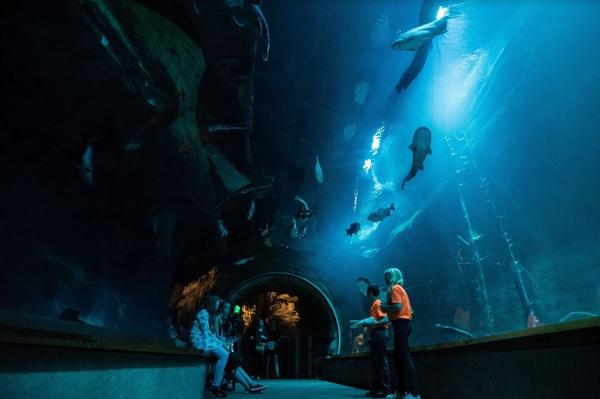 Experience marine life on the sides and overhead through a tunnel.