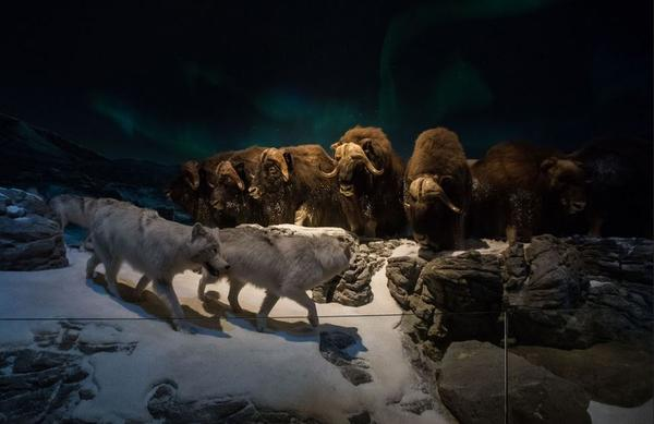 This exhibit aims to showcase the hard realities of the wild.