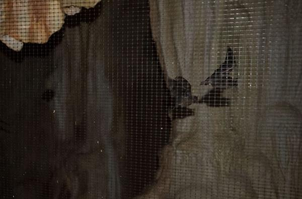 Walk through a cave and come face to face with bats flying behind a net